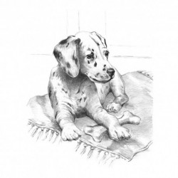 Sketching Made Easy Std Dalmation Pup (EN)